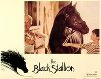 The_Black_Stallion-spb4763106