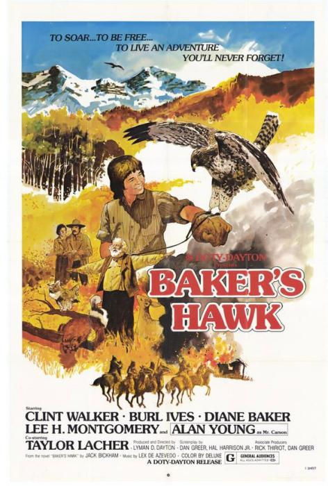 Baker's_Hawk-spb4792325