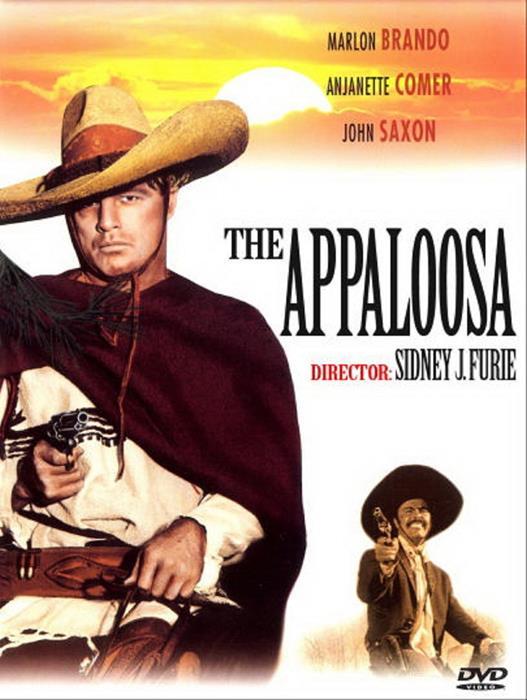 Appaloosa-spb4755771